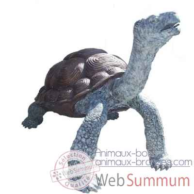 Fontaine tortue 4 -BRZ0744V