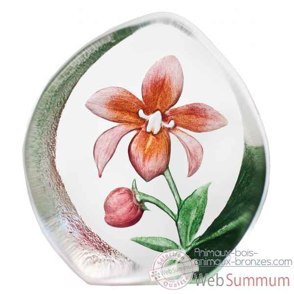 Orchidee, rose Mats Jonasson -33922